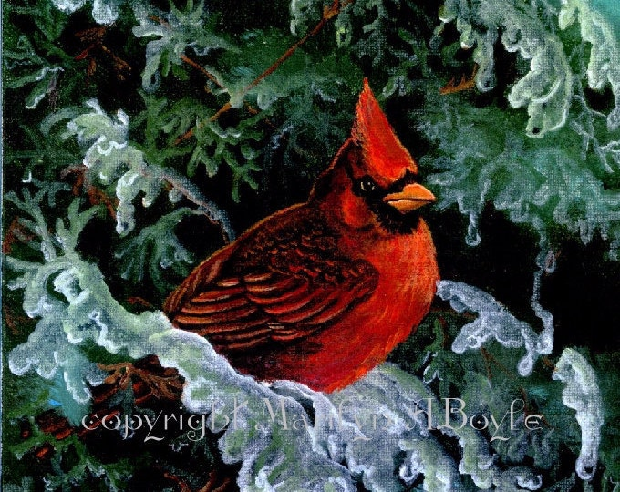 PRINT - CARDINAL and ICE; bird, male, icy branches on cedar, winter, song bird, wall art, 7.75 x 9.50 inches, nature, wildlife,