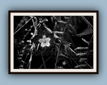 Black and White Flower Photograph Digital Art Print- Digital download, printable wall art