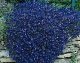 Rockcress-Cascade Blue-(Aubrieta)- 50 Seeds