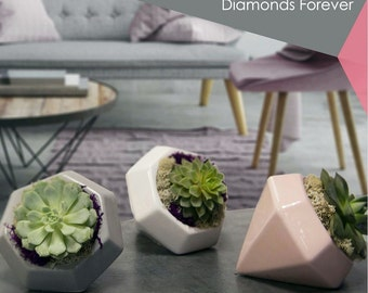 "Diamonds Forever Grey Planter with Live Succulent Plant - 3"" x 2.5"" x 5"""