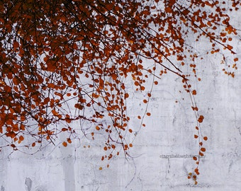 Red leaves photography, cement wall, gray, fall photograph, autumn, tree fine art print, surreal, nature wall art, home decor, wall decor