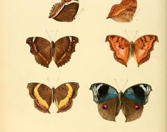 Butterflies exotic prints 1857  62 printable prints