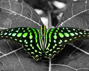 Neon Butterfly Instant Photo Download, Insta-Photo, Nature Photography, Wildlife, Summer, Garden, Insect, Green, Macro, Black and White