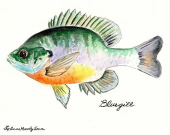 Bluegill Fish - Prints from the original watercolor painting by LeAnne Sowa