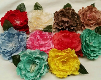 Peony, assortment of colors to flowers of Flemish