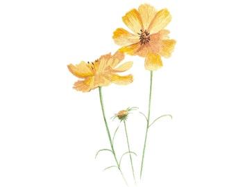Wildflower Art Print - Botanical Illustration Art - Flower Illustration - Floral Art - Yellow Home Decor - Botanical Print - Nursery Decor