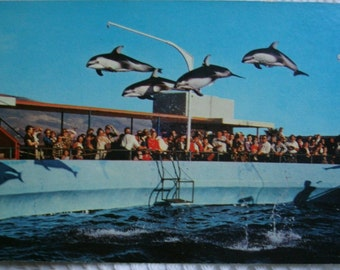 Vintage postcard.Vintage USA postcard,Marineland of the Pacific.Oceanarium.Dolphins.Ephemera.Collectible.Blue.High flying dolphins.Card.