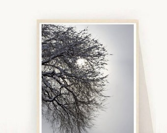 Minimalist Poster, Winter Tree, Printable Art,  Abstract Photo,  Photography, Printable Photo, Instant Download, Wall Art