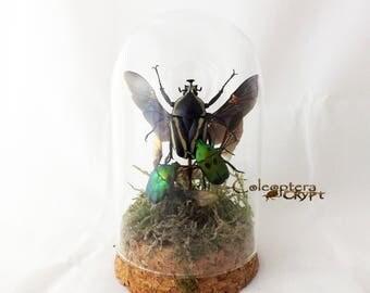 mini bell dome with trio beetle compositon