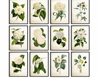 White Botanical Print Set of 12 Botanical Prints set Giclee Canvas Art Prints, Antique Botanical Prints - Posters - White Flowers - Wall Art