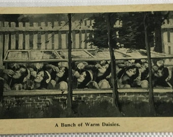 A Bunch of Warm Daisies, Antique Postcard from the 1900's.
