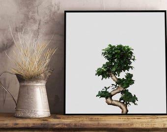 Bonsai II Artwork - Framed / Unframed canvas / Print - Botanic