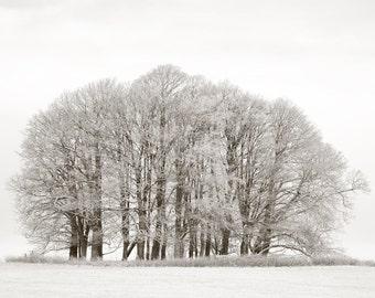 Dinefwr Park, Llandeilo, Carmarthenshire, Wales, Limited Edition Photograph, Fine Art Print, Landscape, Trees, Snow, Ice, Winter