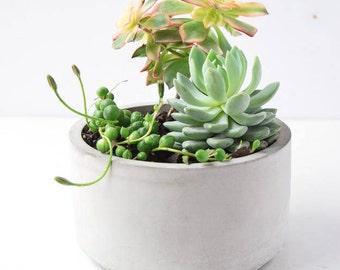 Round Concrete Bowl - Succulent Planter - Concrete Planter