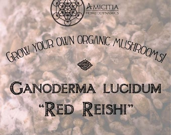 Organic Reishi Grain Spawn (G. lucidum) LIVE MYCELIUM - 70g *PDF Book Included