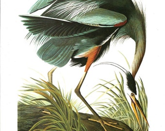 Vintage Bird Print Great Blue Heron Audubon Art Illustration 1978 Home Decor Wall Art Home Living Collectible Nature Wildlife Art Print