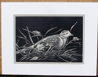 Scratchboard - Bird Art - Mourning Dove in Nest - Black & White - With Mat - Fine Art - Original - Wall Art - Wildlife Art - Nursery Decor