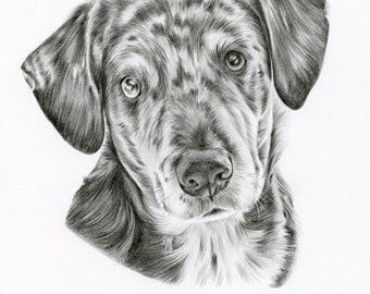 Custom Black and White Pencil Drawing size 8 x 10, Custom Pet Portrait, Custom Pet Drawing, Dog Art, Dog Portrait, Pencil Drawing, Graphite