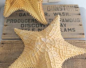Vintage Large Natural Starfish Specimen Display