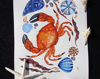 Crab Illustration/ Crab Watercolor Painting/ Nautical Art/ Coastal Decor/ Beach House/ Ocean Art/ ORIGINAL Painting/ Sea Shell Art