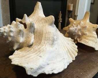 PAIR Great LARGE vintage Conch SHELLS treasure from the sea