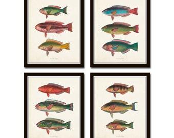 Vintage Tropical Fish Print Set No.3, Fish Prints, Giclee, Art, Prints and Posters, Coastal Art, Nautical Art,Illustration, Collage