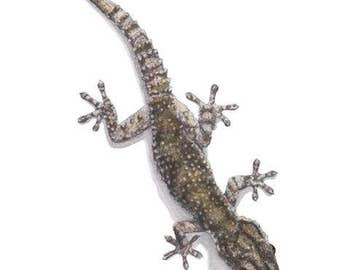 Signed Print - Gecko (TM01) - small