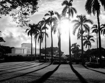 LDS Laie Temple Photograph - Palm Trees - Digital Download - Printable