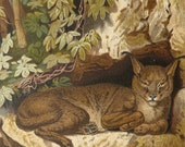 1890 Antique print of a CARACAL. African Wild Cat. Zoology. Natural History. 127 years old lithograph
