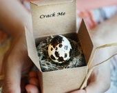 Crack Me! Pregnancy Announcement Quail Egg - Boy Girl - Gender Reveal - Baby Shower Invitation - Custom Unique Thanksgiving Christmas Winter