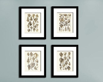 Seashell Print Set Of 4, Shell Prints, Seashell Wall Art, Beach Decor,