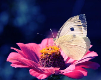Summer Nature Fine art photography Pink Flower White Butterfly Photography Print Large wall Art Colorful Photography Navy Pink color artwork