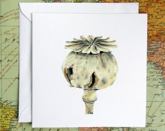 "Poppy seed head blank greeting card hand coloured botanical art 15cm/6"" 'Papaver somniferum' opium poppy hand made by artist"