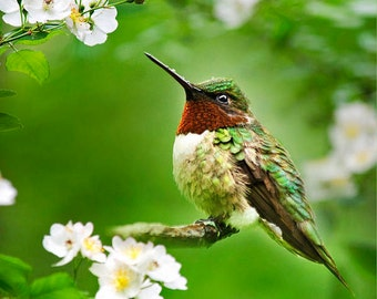 Bird Photography, Hummingbird Photo, Fine Art Photo Print, Green Wall Art, Bird Art Gifts, Wall Art, Humming bird With Flowers, Summer Decor