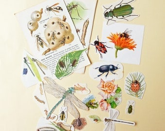 SALE Insects, Bugs - Vintage Paper Ephemera Craft Pack / Supplies / Scrapbooking