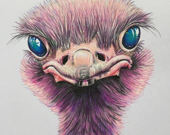 Original coloured pencil ostrich drawing 'Petunia' Free UK delivery.