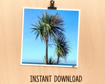 Instant download picture - Nature teal palm tree sea