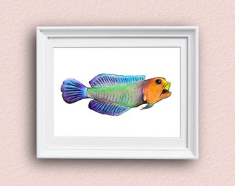 Fish Art Print - Colorful - Fish Art - Yellowhead Jawfish