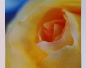 Yellow Rose with blue card 5x7