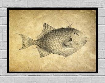 Antique Fish print, Old Paper, Vintage Dictionary page, Fish poster, Vintage Fish Art, Fish Print, Fish print, Fish print H6