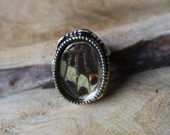 Beige butterfly Ring