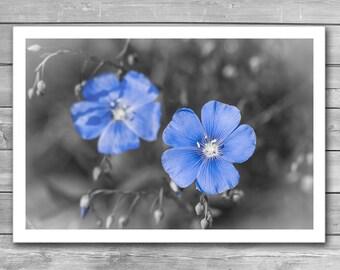 Gentle Blue Flower, Blossoming, Flower Poster, Black and White Photography, Flower Prints, Framed Photo Print, Blue Flowers, Interior Prints