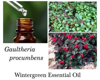 Wintergreen Essential Oil, Wintergreen Oil, 100% Pure Authentic Wintergreen  EO