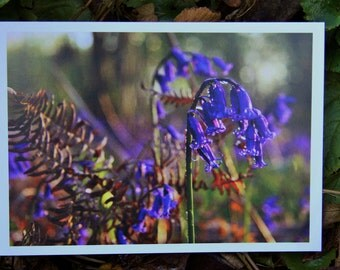 Bluebells At Sunrise (Greeting Card)
