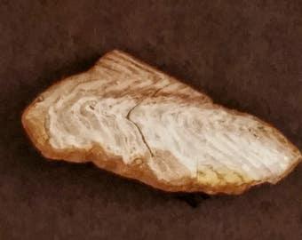 Petrified wood segment