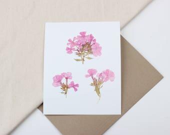 Print- Pink Phlox - 8 x 10