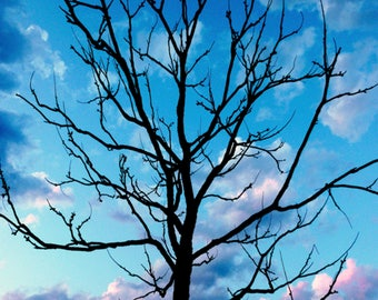 Sunset Tree Nature Photography 8x10 Digital Download