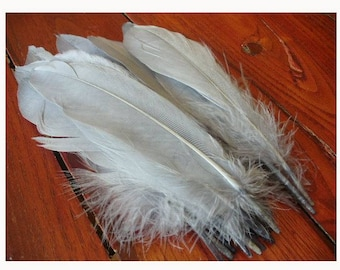 1 feather for various confections batch * feathers C 103