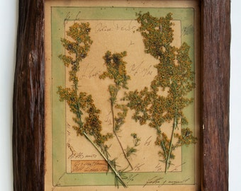 herbarium rustic oak frame pressed flower art 9x9 inches 22x22 cms pressed flowers framed pressed flower art rustic wood frames