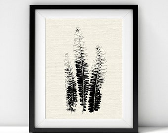 Fern Fronds, Black and White Art, Botanical Art, Botanical Prints, Ferns, Leaves, Minimalist Poster, Downloadable Prints, Nature Prints, Art